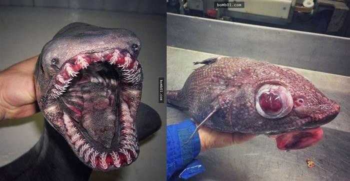 俄羅斯漁夫分享「17種他曾經抓過的超恐怖深海生物」!