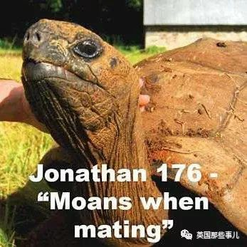 186歲老龜每周堅持啪X啪可就是沒後代。最近終於找到了原因,無語.....