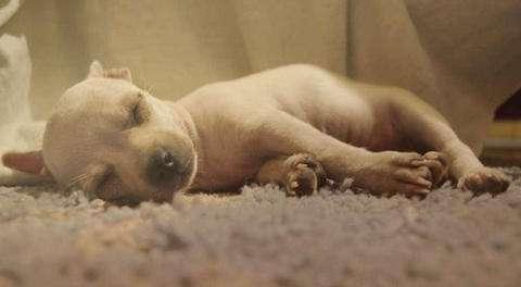 狗狗趴著睡是因為膽小?四腳朝天睡是為什麼?