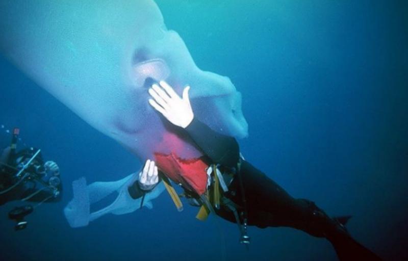 這位潛水員在深海發現「巨型怪魚」,竟不顧大家反對「遊進牠的身體裡」,最後他的下場…