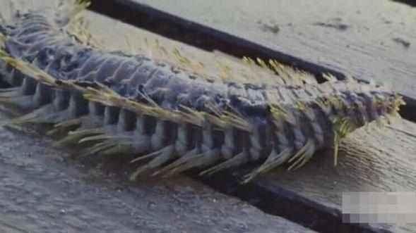 漁民出海捕魚,卻被奇怪動物咬傷,傷口感染的速度讓他心寒!