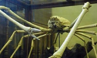 約4米長殺人蟹,在日本沿海殺害34名漁民和26名遊客,或遭到變異!