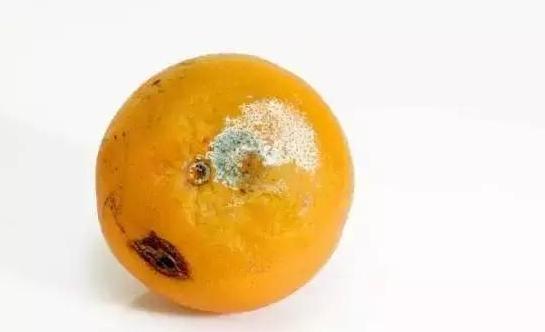 食物發黴,去掉壞的部分還能吃嗎?這7類真不能吃,特傷肝腎!