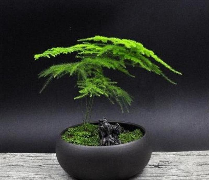 家裡再窮,也要擺上這幾種植物,越住越富有!