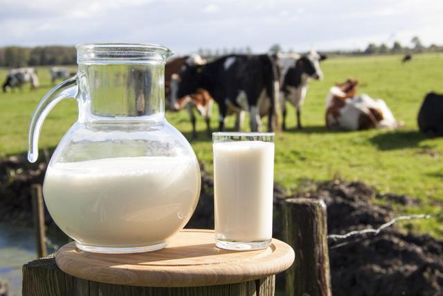 牛奶中全是防腐劑?喝牛奶有毒致癌?知道了這些,才能健康喝牛奶