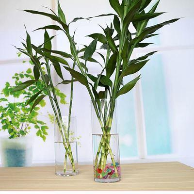 富貴竹「喝了」這種水,冒白根、長綠葉,養好能「開花」,招財