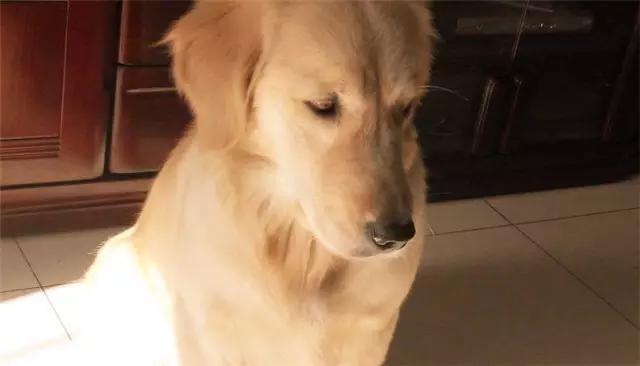 你知道什麼時候你讓狗狗最失望,最難過嗎?