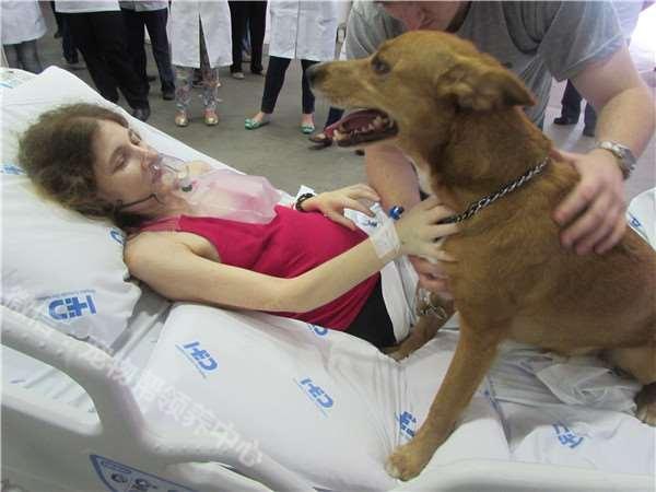 癌末病人撐著一口氣,只為了見愛犬一面,狗兒做了「這個動作」…所有人都哭翻了!!