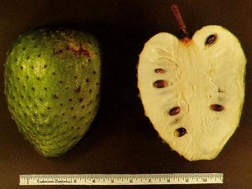 刺果番荔枝果實。(維基百科)
