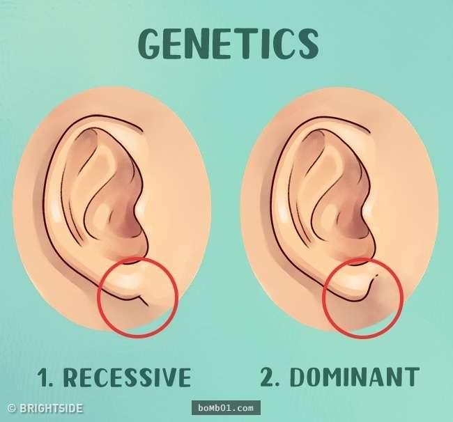 我們的耳朵除了用來聽東西,沒想到還可以「看出」你的健康狀況!