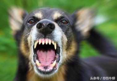 女兒意外身亡,黑犬一旁哭嚎不止,隔日竟咬傷侄子,打死不退才知道真相