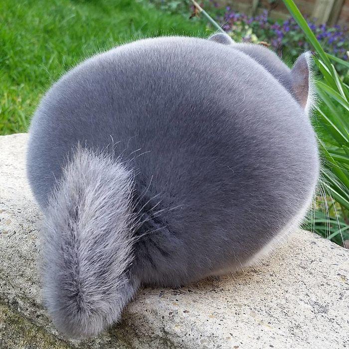 這萌度爆表的屁股到底是什麼神奇的小生物?太可愛了啊!