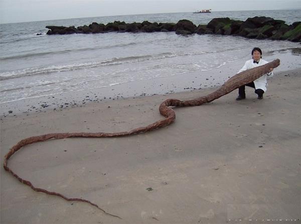 男子在海邊科考時突然看到一具乾屍!像龍又像蛇!幾天後「化驗結果」出來的時候所有人都驚呆了!沒想到牠...