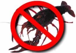 臺灣人超喜歡吃的海鮮,竟然是這樣養大,裡面重金屬和寄生蟲數量毒性堪比一斤砒霜!