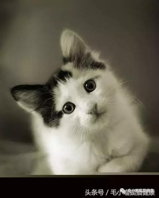 貓咪臨死前跟家裡人道過別之後就失蹤了,背後的原因讓人動容...