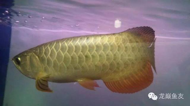 魚缸混養與造景不能兼顧?規則往往就是往往用來打破的!