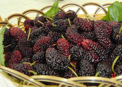 4種補腎水果或助防腎虛【儘速轉發,功德無量】