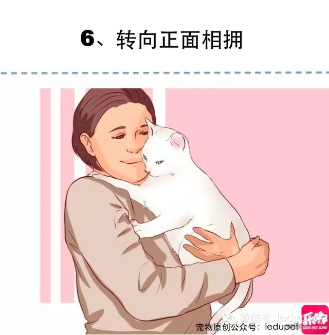 被抓?被撓?貓咪抱抱的「正確姿勢」