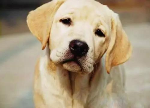收藏|六個徵兆,告訴你狗狗該換糧食了!