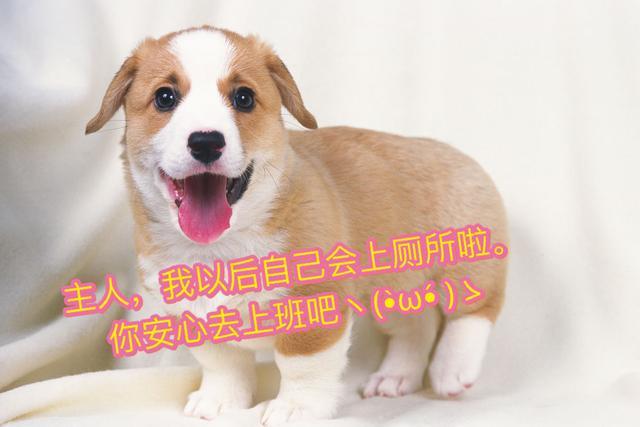 狗狗隨地大小便時簡直想讓它狗帶!5步輕鬆讓它定時定點大小便!