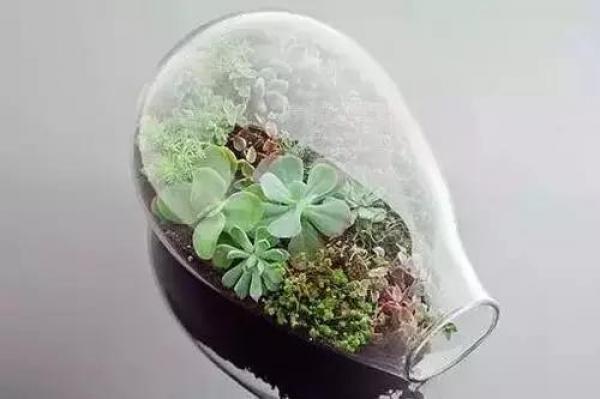 盆栽高手支招:手把手教你用廢品做花盆!比買的還漂亮!