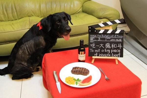 狗狗被宣判死刑,主人為它實現,最後27個特別願望!它哭花了臉