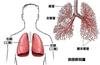 內臟越乾淨,疾病越少!教你最有效的「有機清潔法」