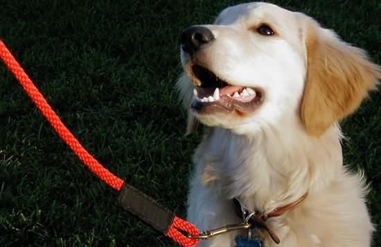 寵物犬一定要牽繩 就像牽著小朋友一樣!