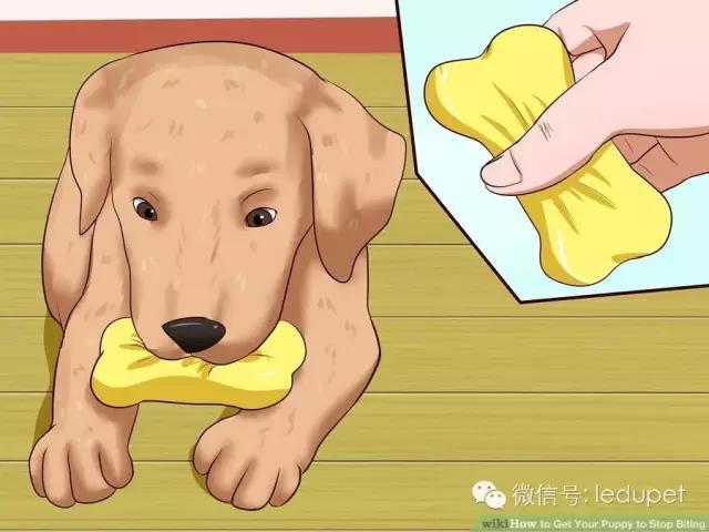 如何制止狗狗的啃咬行為