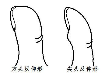 手相算命:大拇指指紋手相圖解