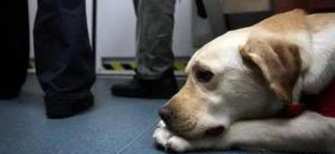 導盲犬坐公交被要求滾下車,辱罵到哭,司機的反應讓所有乘客佩服