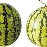 99%人都不知道!西瓜要挑「母的」才好吃!老闆如果賣你這種紋路的西瓜,絕對不要傻傻掏錢!(影片)