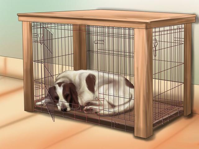 如何讓狗狗入睡,一夜好眠非常重要!