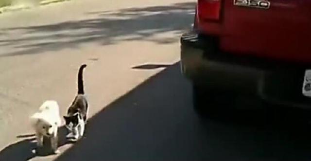 可憐狗狗不幸失明,善良貓咪每天護送它回家,太溫暖了