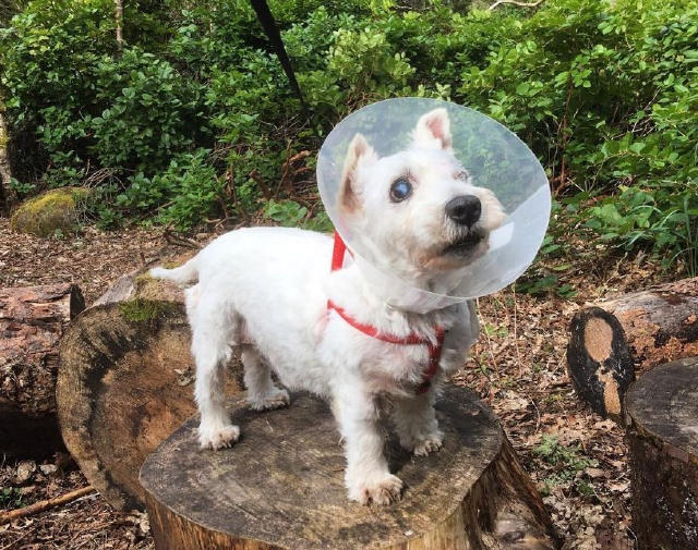 瞎眼小狗逃命幾百公里,離開一個要殺死它的收容所