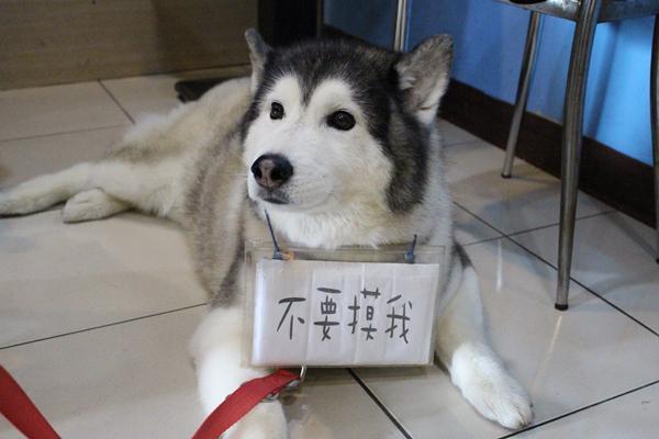 桃園一家寵物友善餐廳裡的這隻狗狗竟然有「這種前科」!!三番五次嚴重咬傷新主人!沒想到最後.....,原來牠的背後竟然..