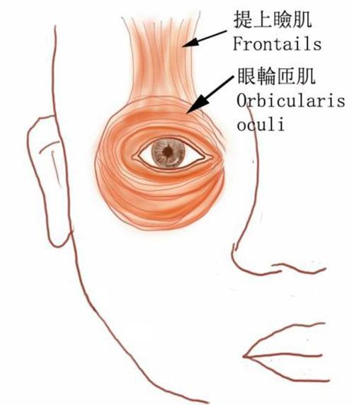 眼皮跳個不停,真的是左眼跳財右眼跳災嗎?也許是這個病在作怪