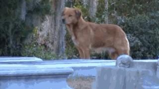 母狗待在寒冷的墓地不肯離開,眾人知道原因後都感動淚崩了