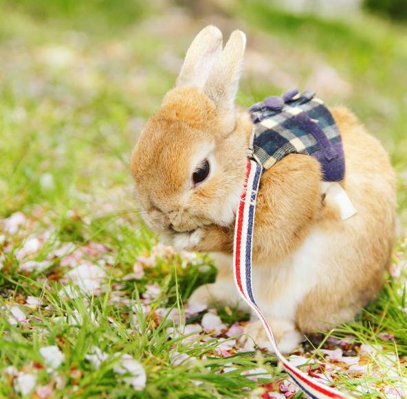 疗愈时光独特可爱又罕见稀少的动物就在instagram里