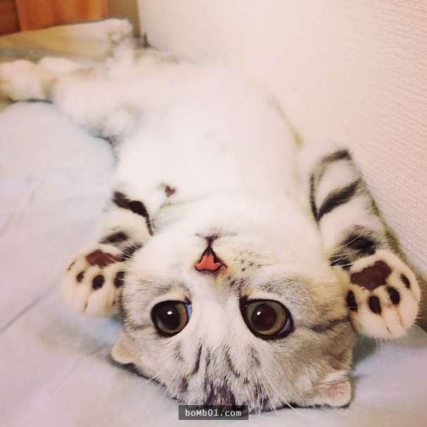 下面就是一些超级可爱的小猫咪照片,只要看一眼,你就会爱上它们.