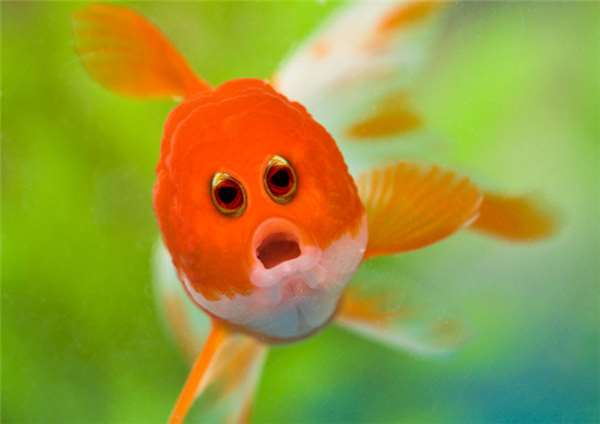 我的世界感觉都要崩塌了,动物的眼睛还是长在两侧最可爱了.