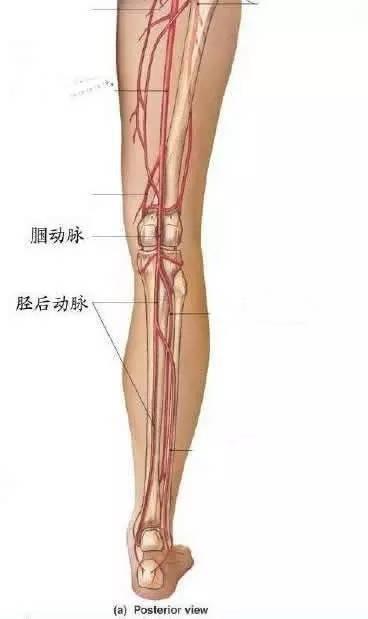 「血管堵塞」只要三步!「一個動作」就能知道你的血管是否堵了,趕緊來測測!