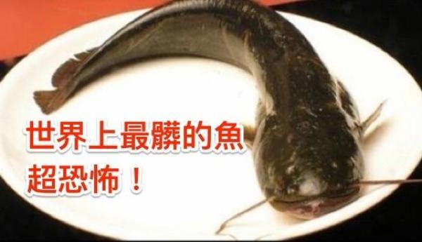 它世界上「最髒的魚」!吃一口等於「3000個癌細胞」進肚內!