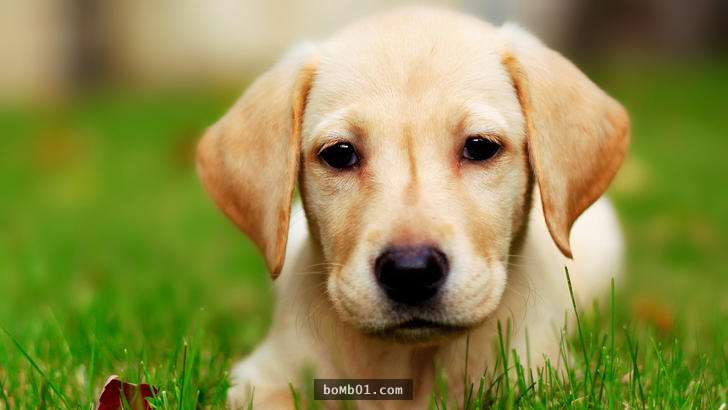用直覺「選出3隻動物」就能找出你的人際盲點,超準的解說馬上就知道要如何改善缺點了!