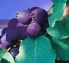 這些水果,吃過3種以上的你是土豪,吃過5種以上的你是貴族!