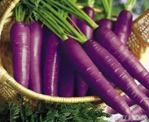 農民種紫色蘿蔔畝產8000斤畝收益過萬,這不是轉基因是自然