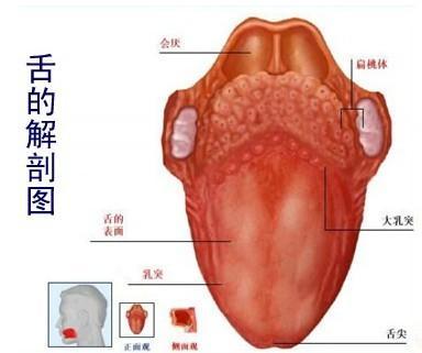 舌癌是因為說話太多了嗎?怎樣避免癌細胞瘋長?
