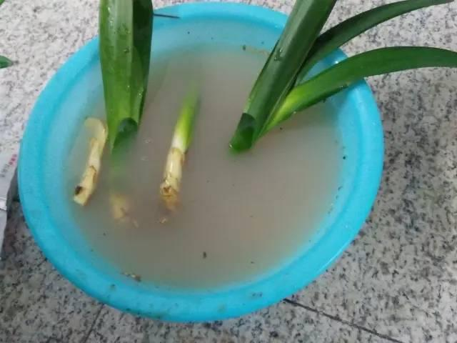 這10種花太好養,放在水裡都能長滿盆,養不活我服你!