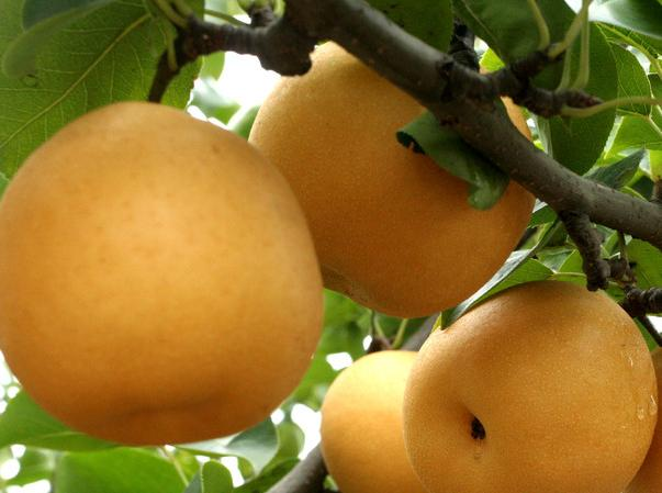 吃什麼水果可以降尿酸治痛風?