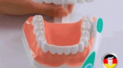 早上起來要先做這件事在刷牙,否則刷的再勤奮也是浪費...!!原來我從小到大都用錯方法了...